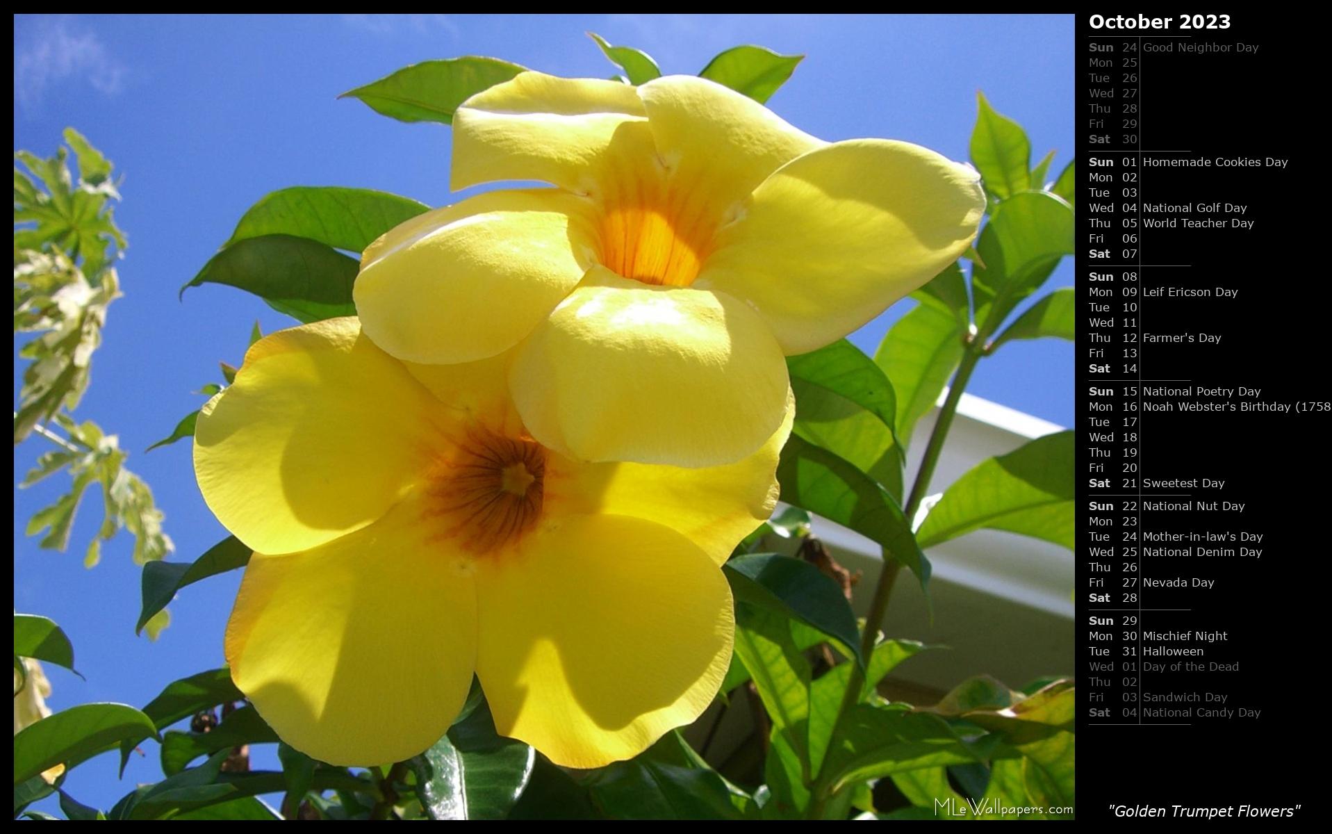 Mlewallpapers golden trumpet flowers calendar golden trumpet flowers izmirmasajfo