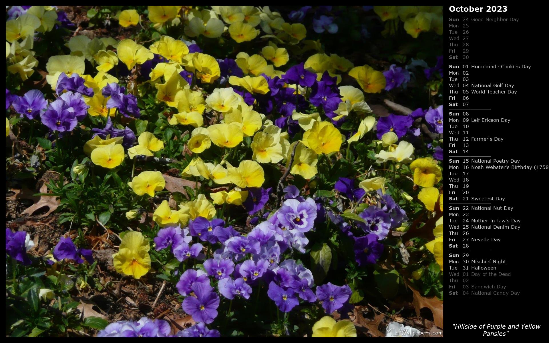 Mlewallpapers Hillside Of Purple And Yellow Pansies Calendar