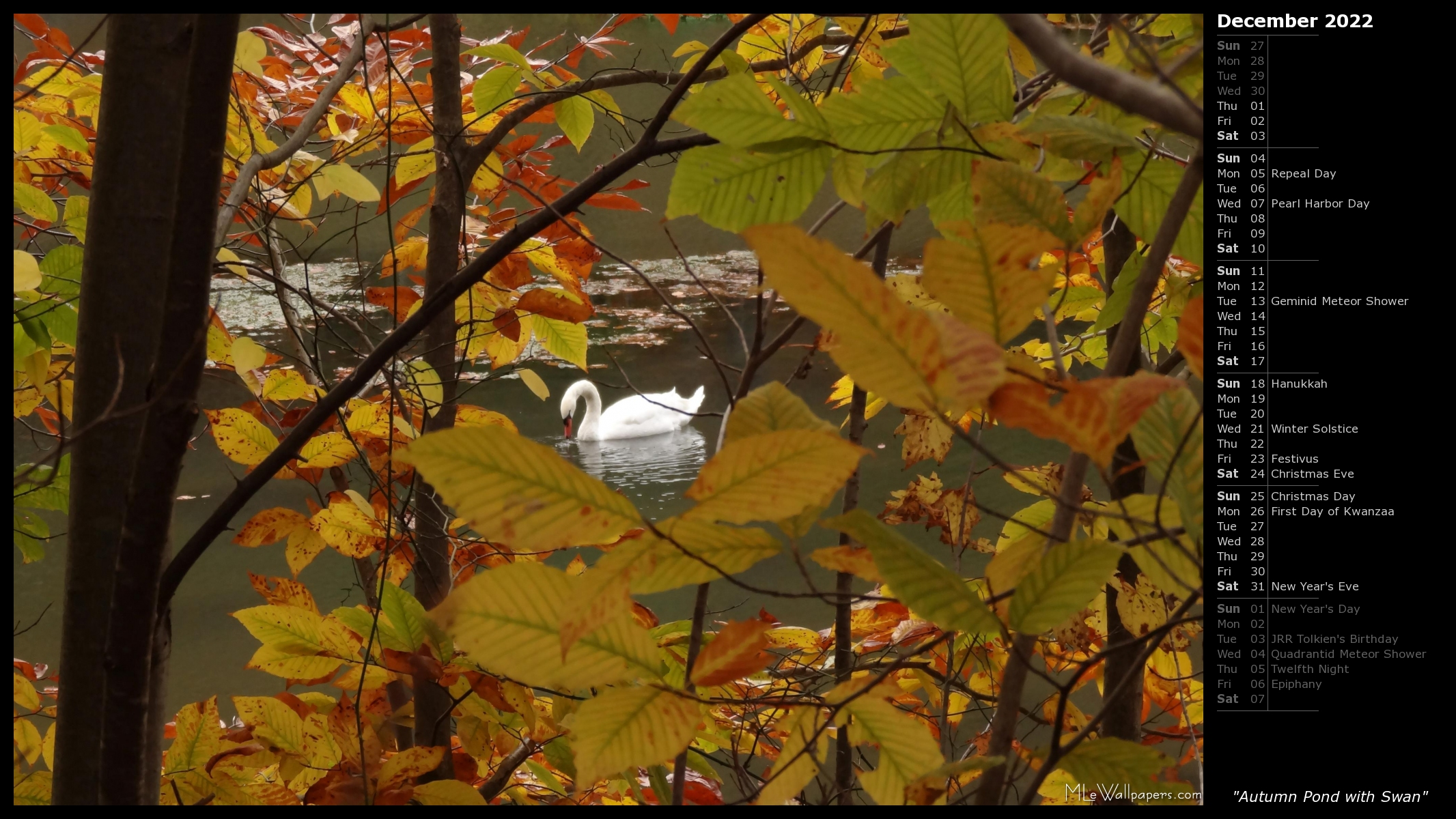 autumn pond with swan