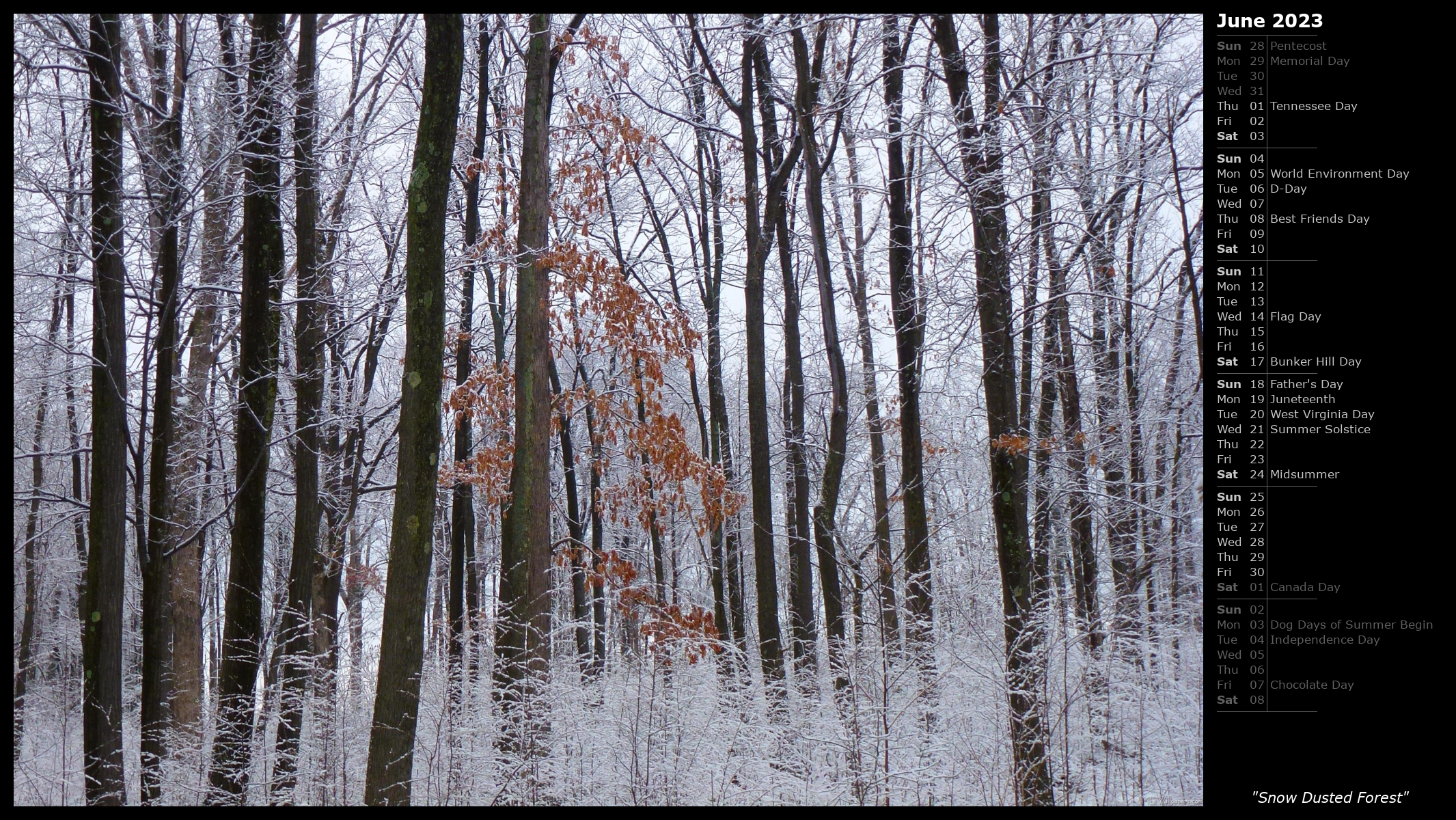 Snow Dusted Forest