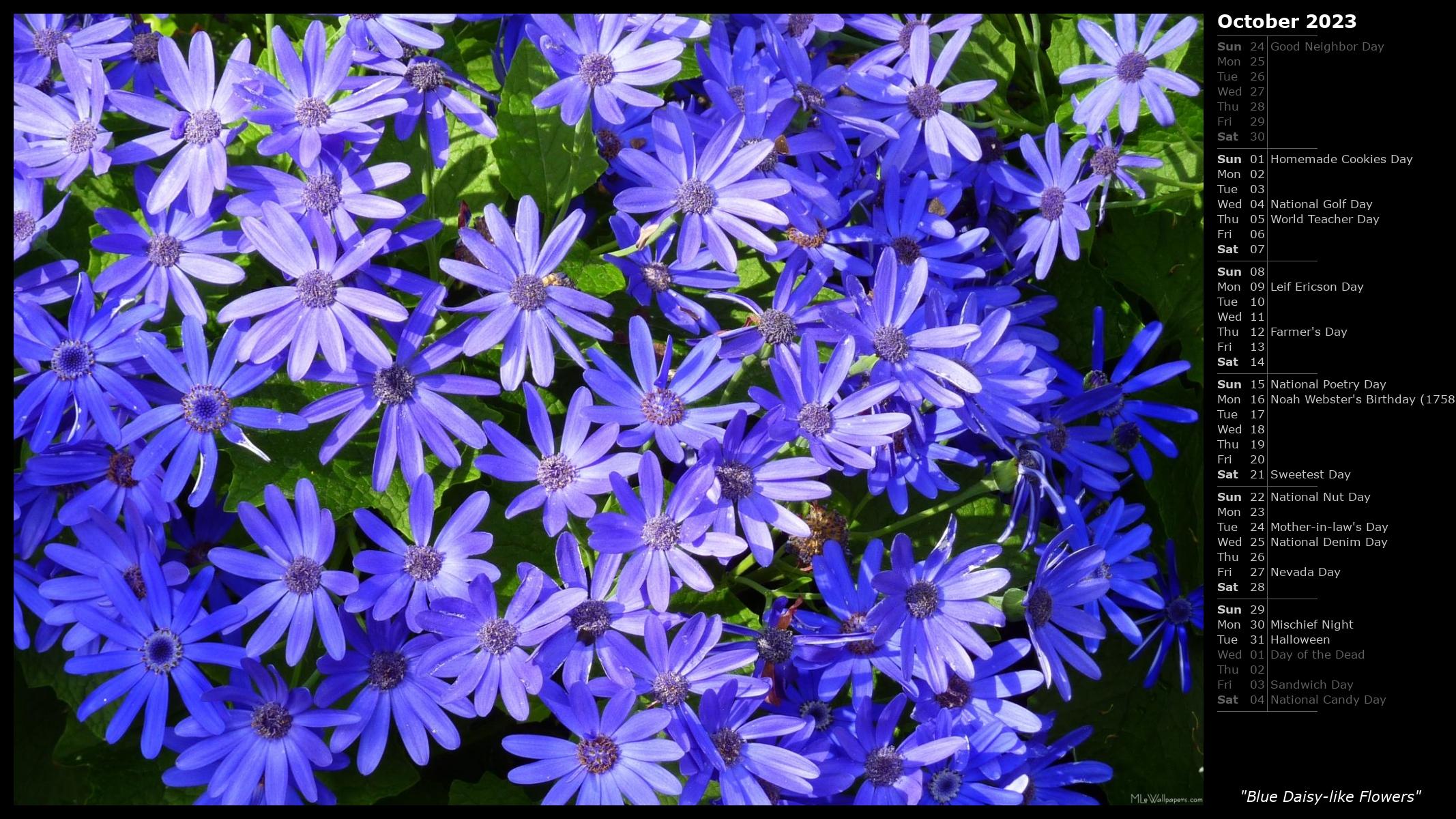 Mlewallpapers Blue Daisy Like Flowers Calendar