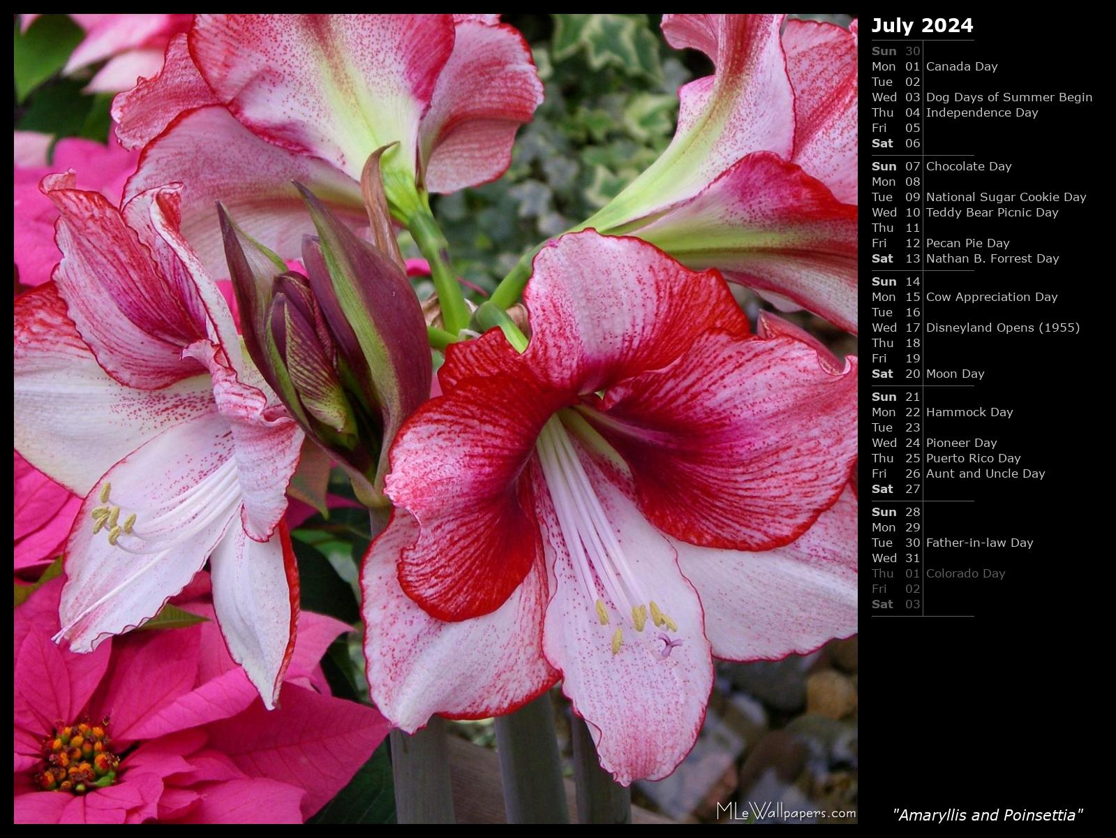 Mlewallpapers Amaryllis And Poinsettia Calendar