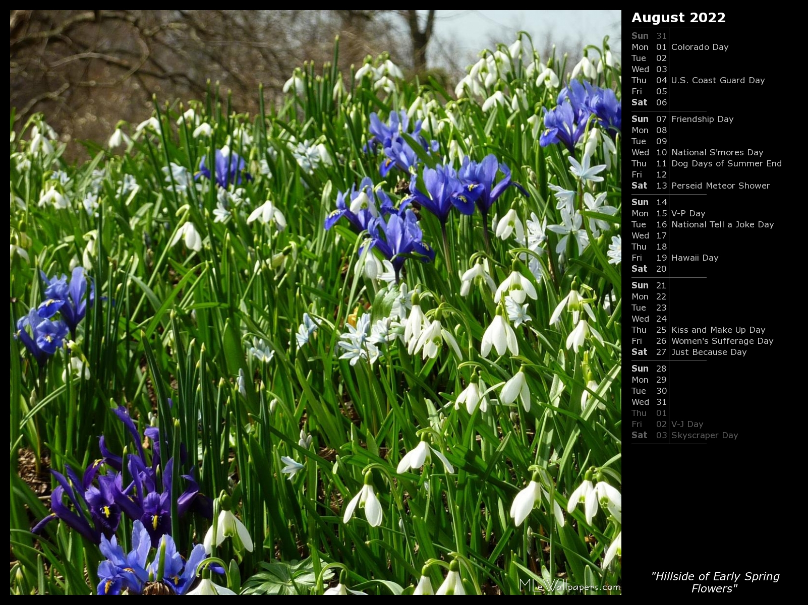 Mlewallpapers Com Hillside Of Early Spring Flowers Calendar