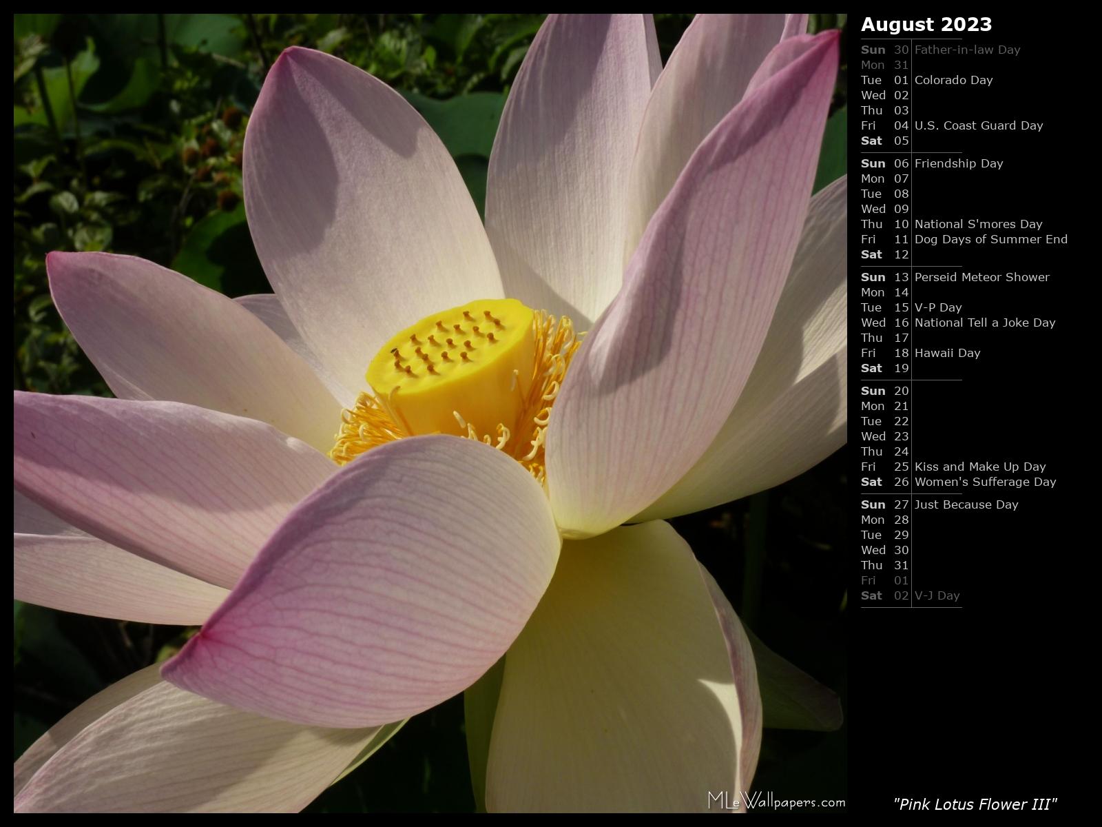 Mlewallpapers Pink Lotus Flower Iii Calendar