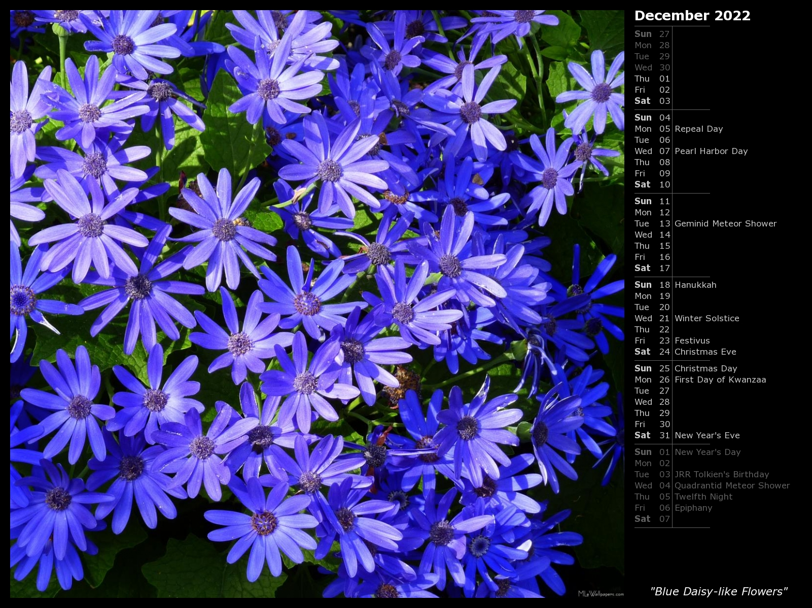 Mlewallpapers Blue Daisy Like Flowers Calendar