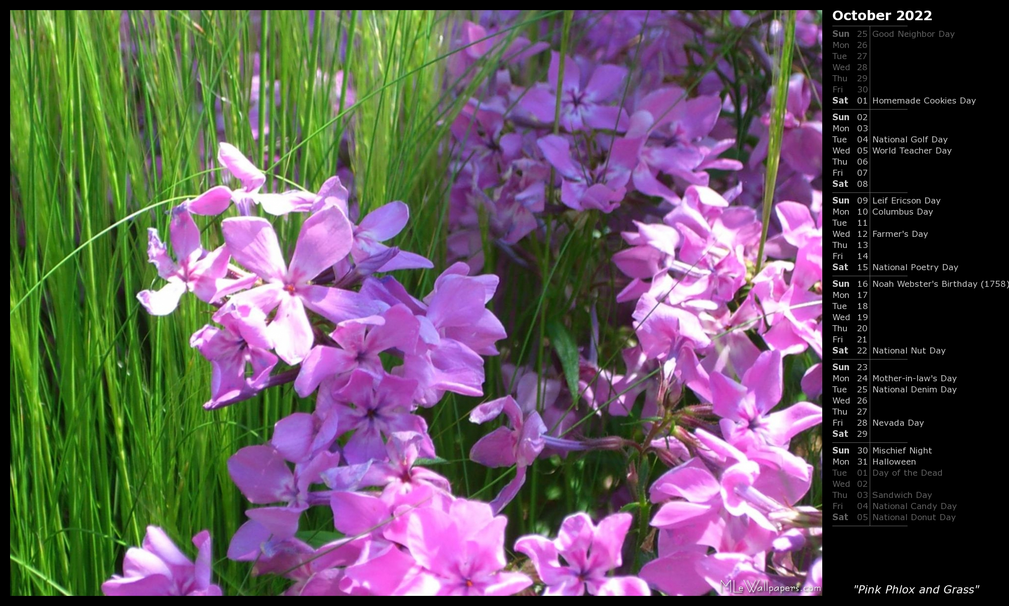 Mlewallpapers Pink Phlox And Grass Calendar