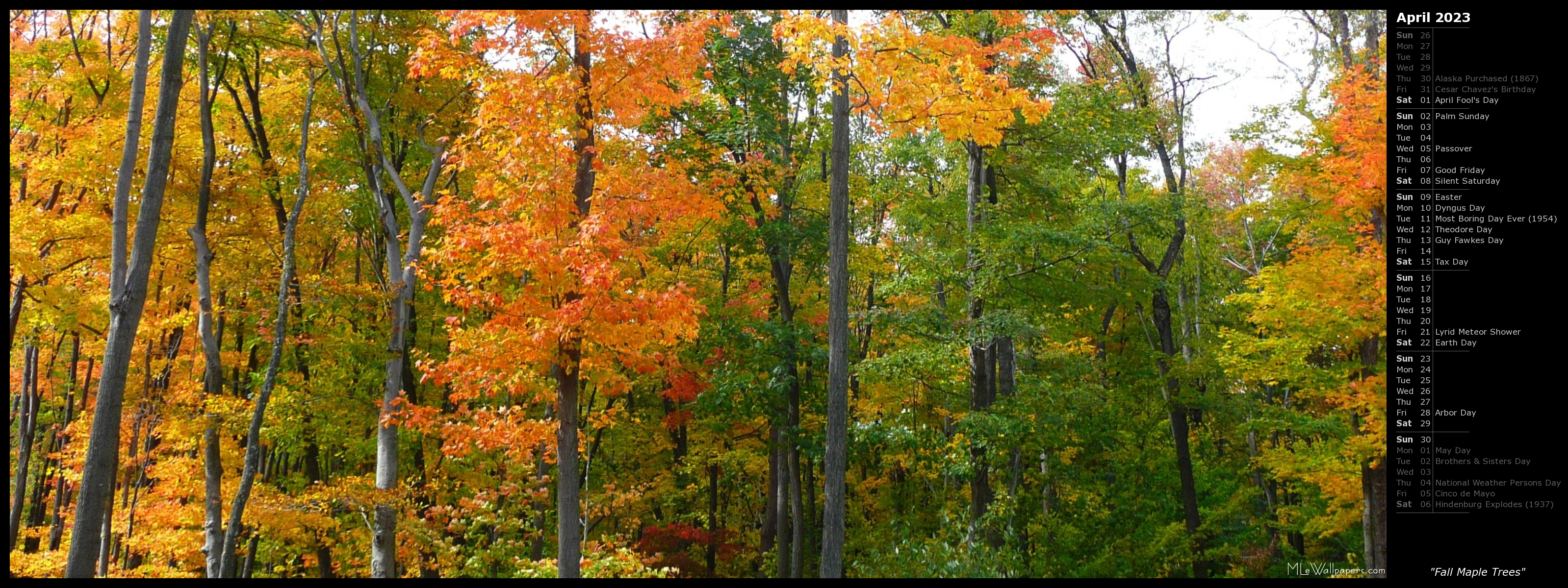 MLeWallpapers.com - Fall Maple Trees (Calendar)