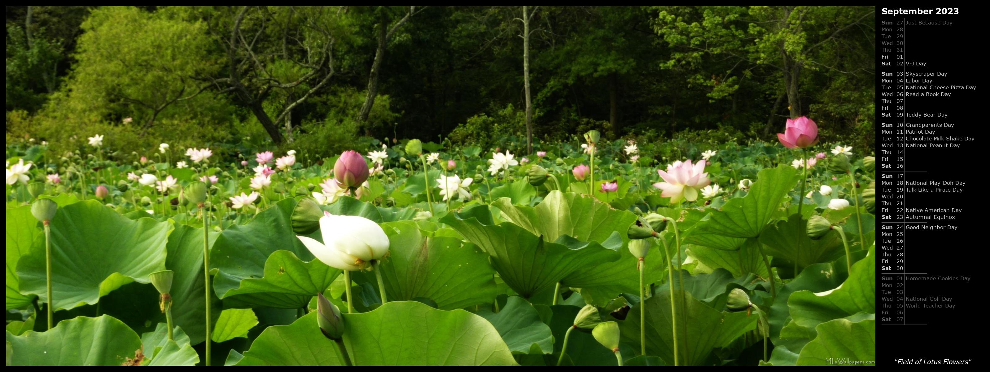 MLeWallpapers Field of Lotus Flowers Calendar