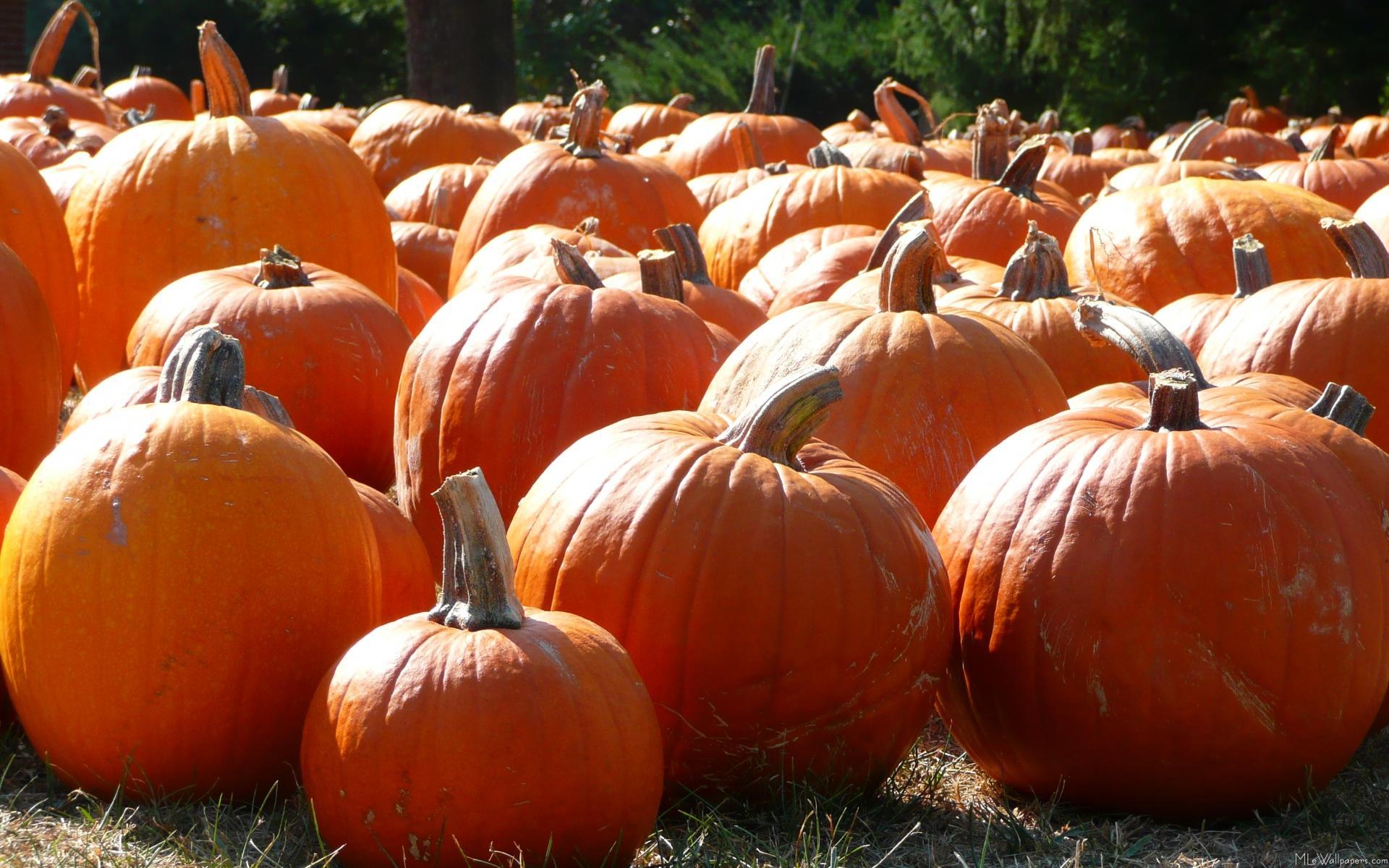 fall pumpkin wallpaper hd wallpaper 1231907