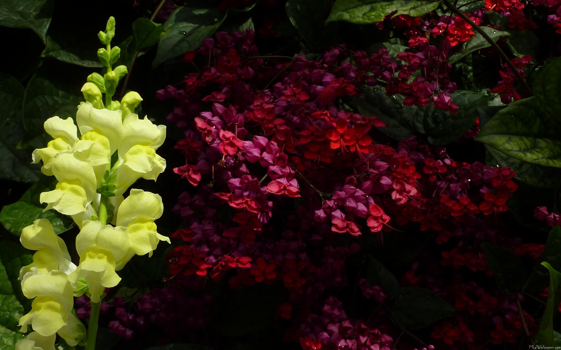 Very Pretty Flowers Pictures Comousar