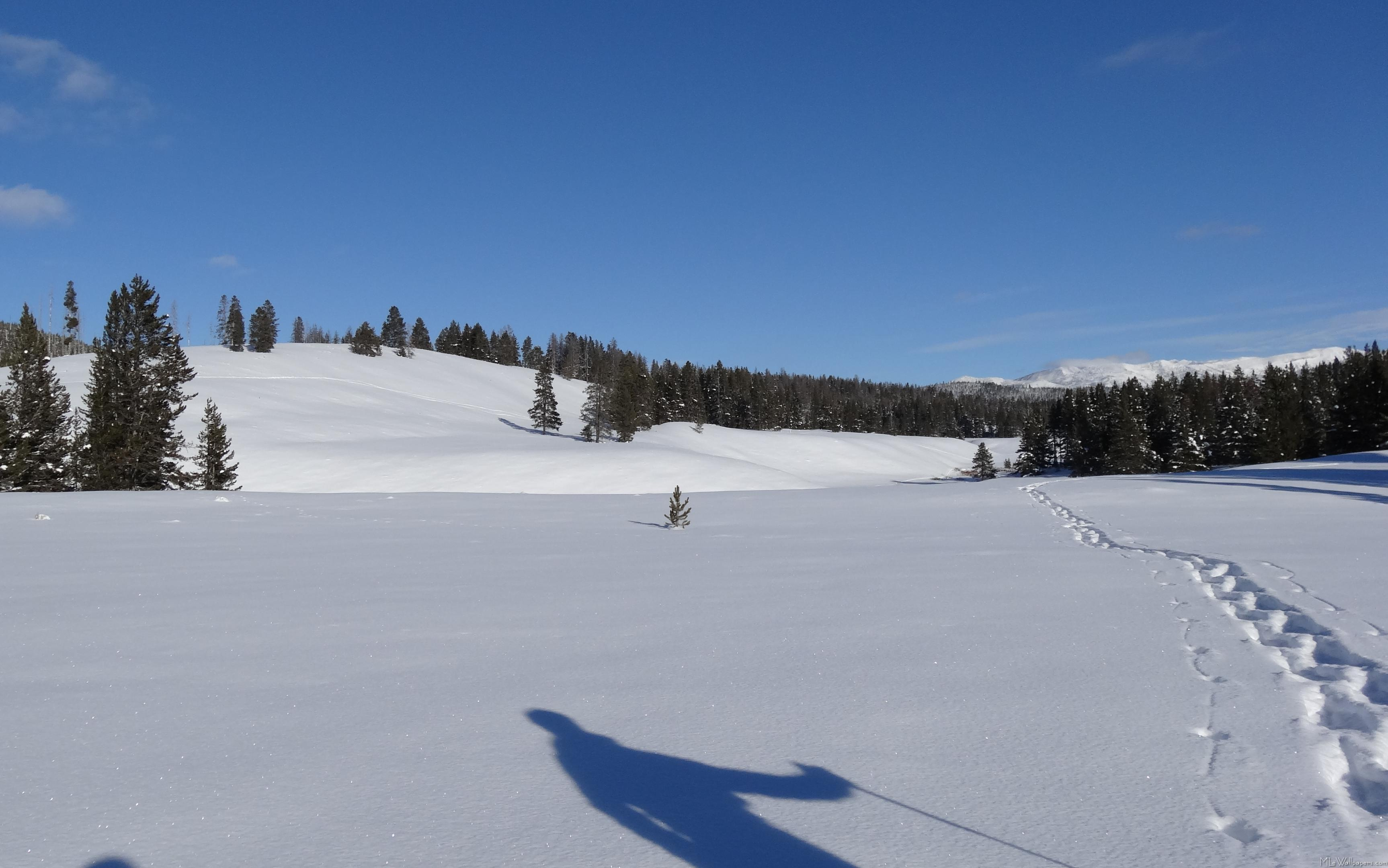 Mlewallpapers Com Snowshoeing In Yellowstone