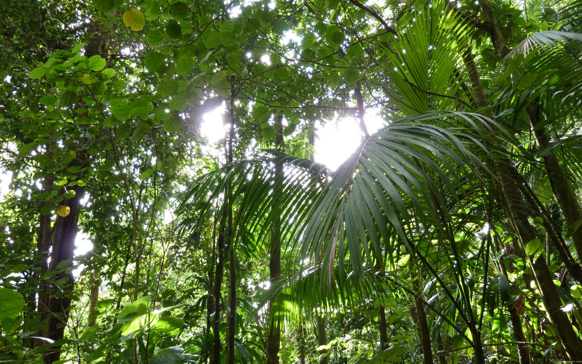 Tropical Rainforest One Day In The Tropical Rainforest border=