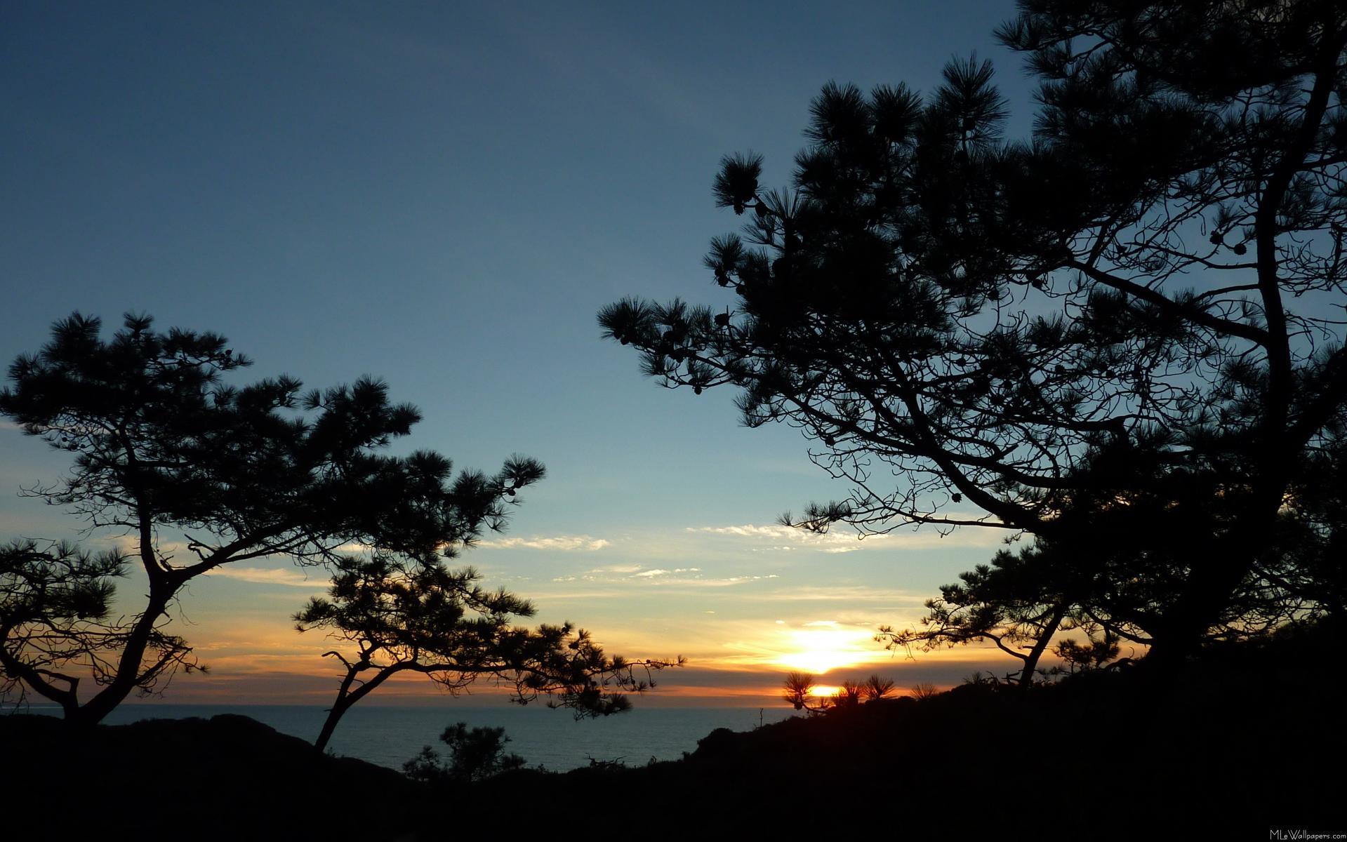 MLeWallpapers.com - Torrey Pine Sunset III