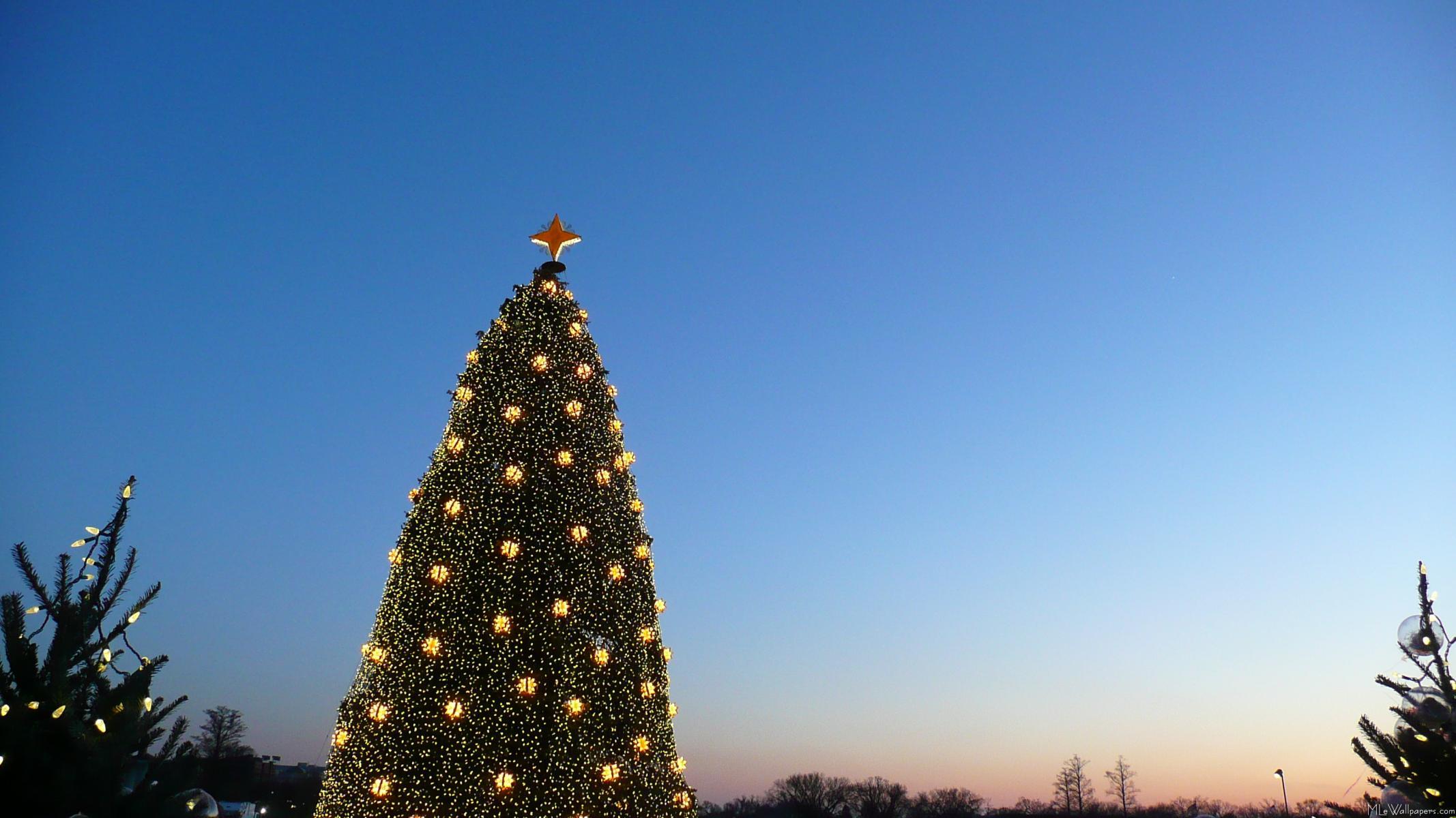 Big And Little Christmas Trees I