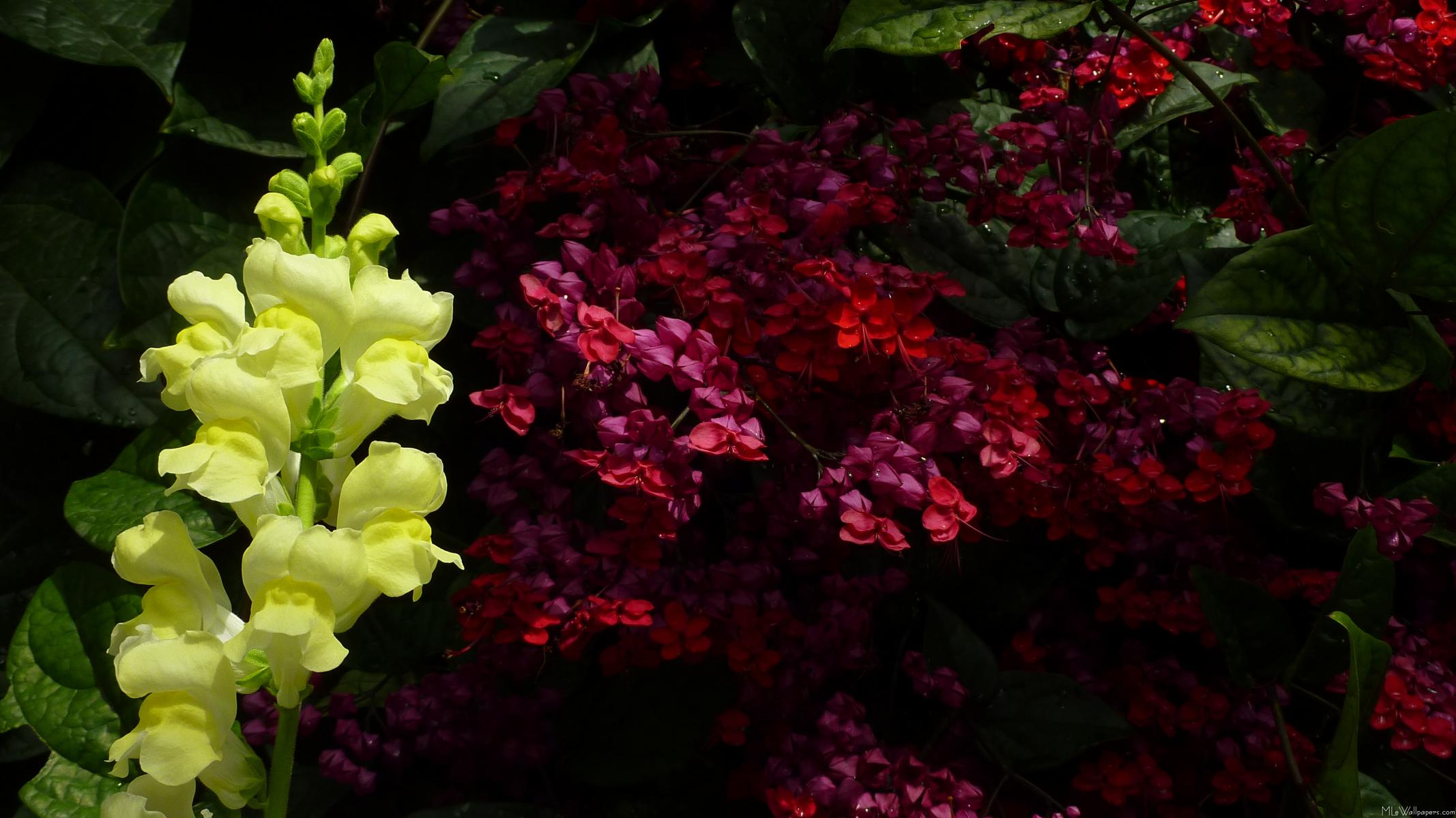 MLeWallpapers Snapdragon and Pagoda Flowers