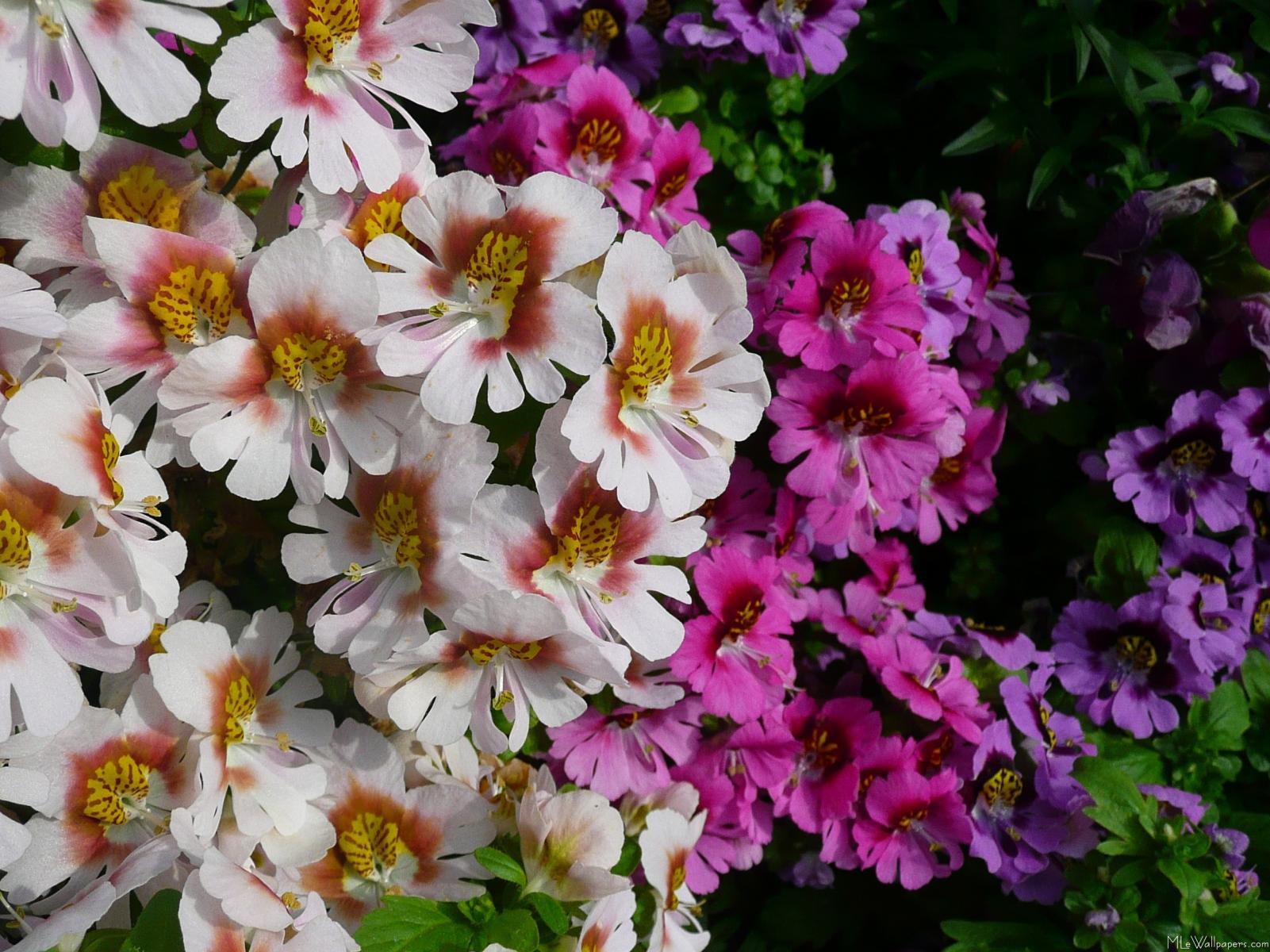 Mlewallpapers butterfly flowers butterfly flowers mightylinksfo