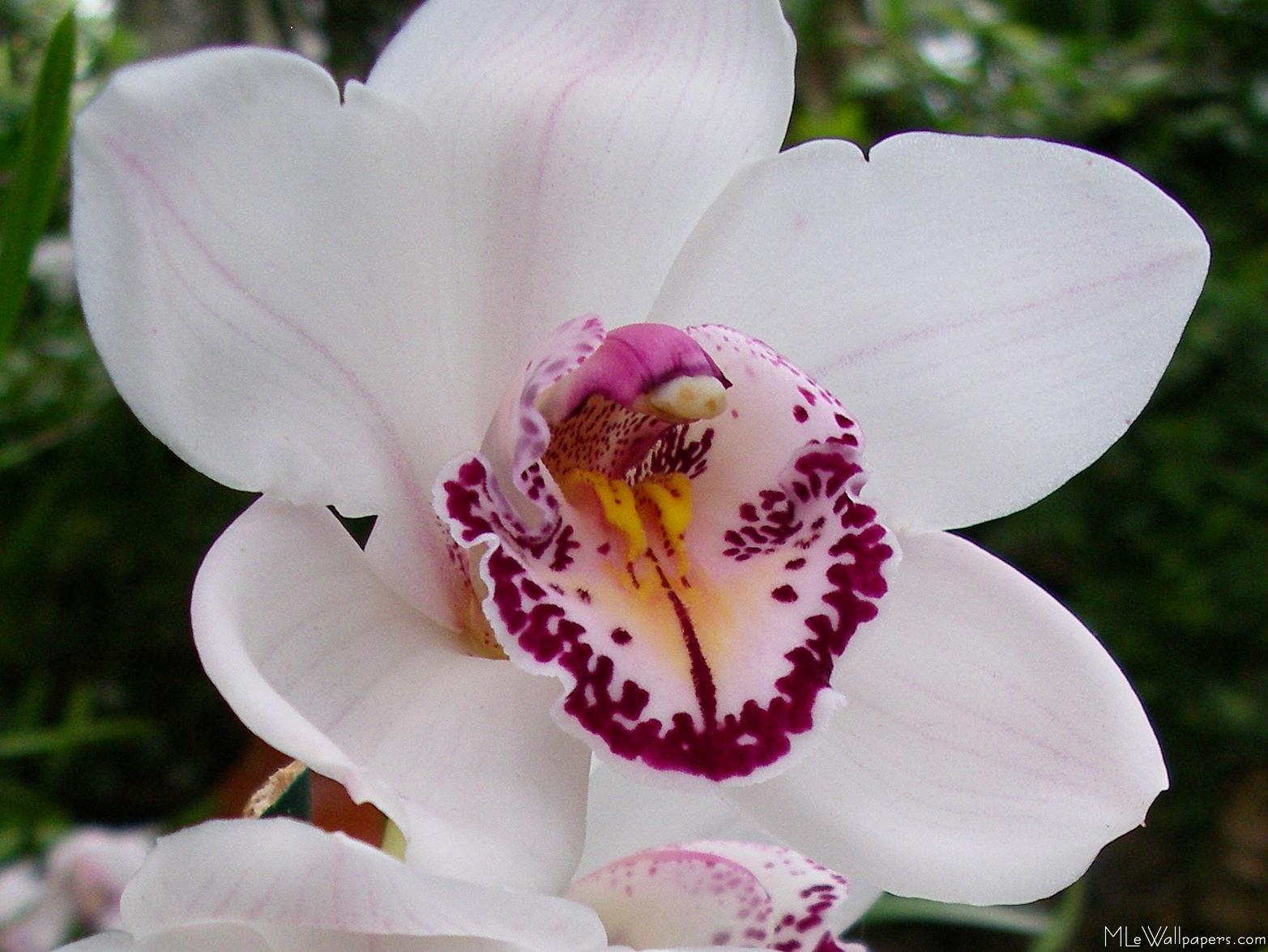 White Orchid Types