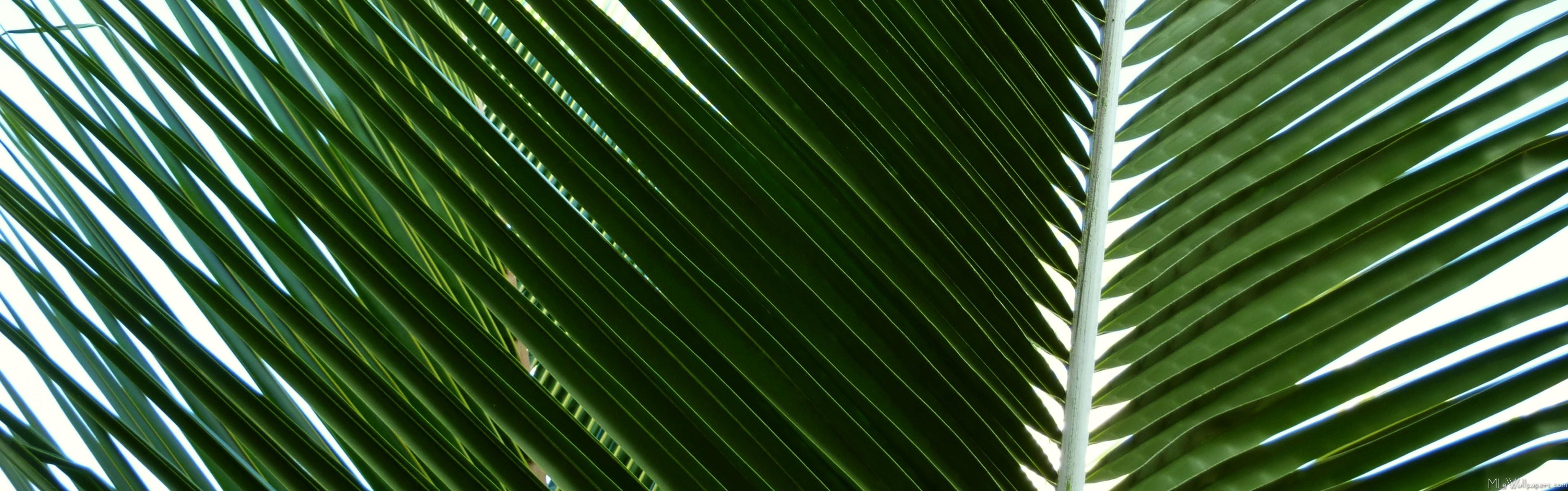 MLeWallpapers.com  Overlapping Palm Fronds