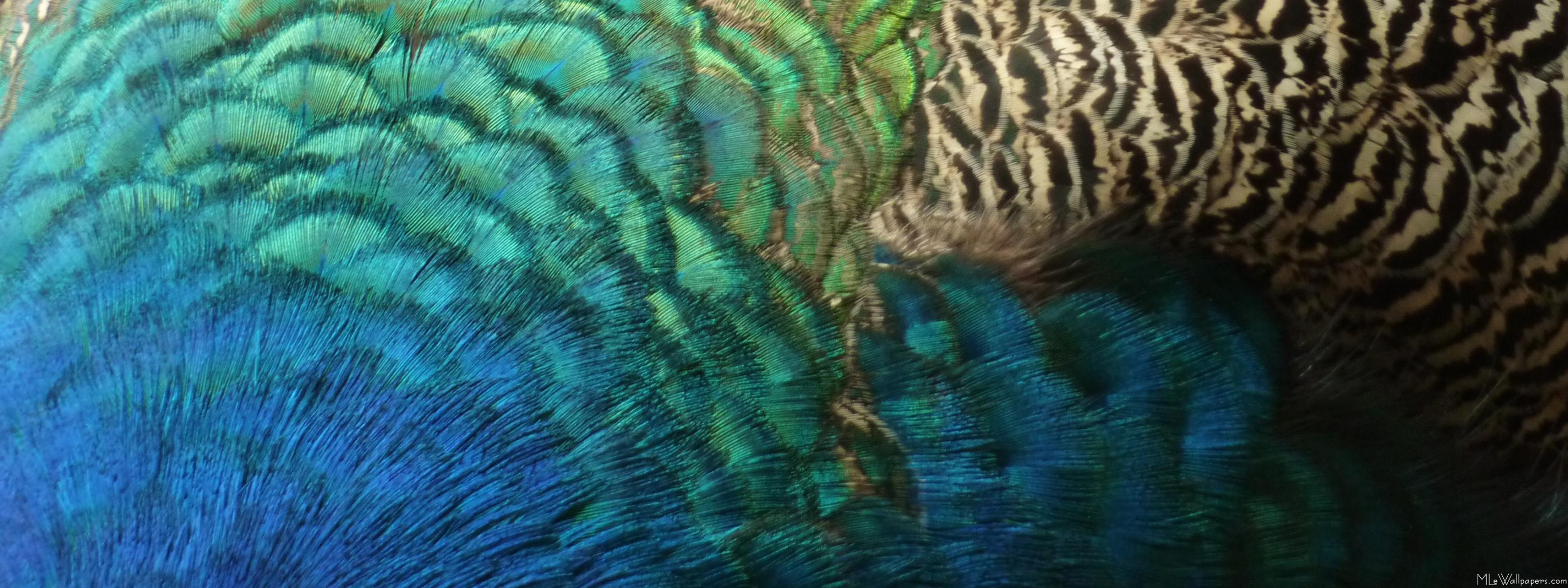 Peacock Feather Wallpaper HD | Mother Earth | Pinterest | Peacock ...