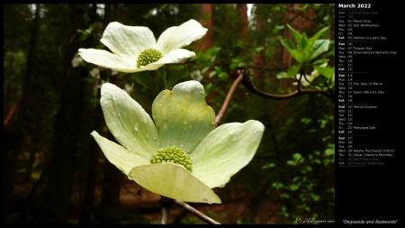 Dogwoods and Redwoods