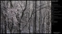 Glistening Icy Forest in Morning Light I