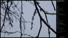 Icy Branches II