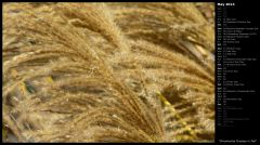 Ornamental Grasses in Fall