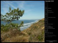 Torrey Pine and California Coastline
